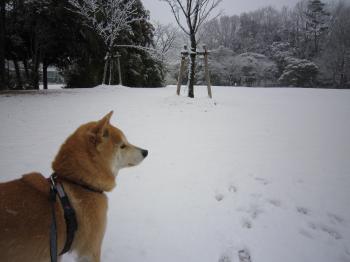 いつもの公園も雪