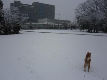 雪で真っ白です!