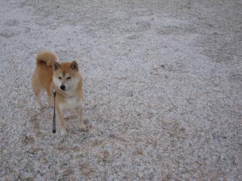 1月の雪はこんな感じでした。