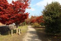 竜田川公園3