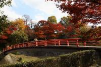 竜田川公園4