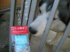 01.11犬山5