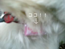 01.11犬山8