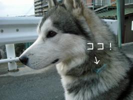 01.11犬山9