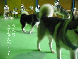 08.02愛ハス8