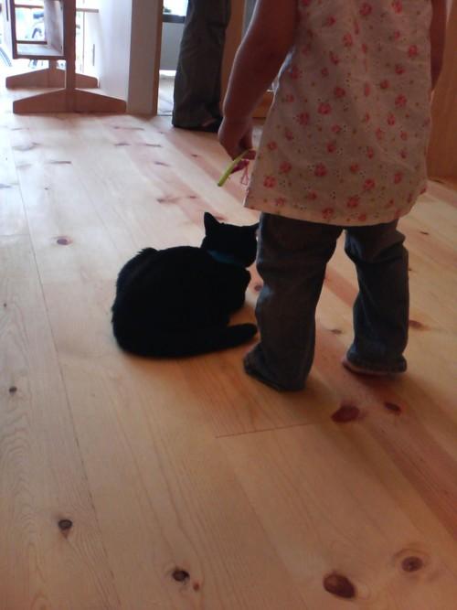 猫のホスト