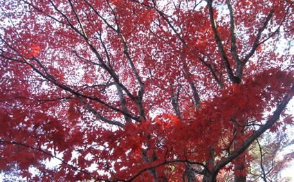 hiroshima-13.jpg