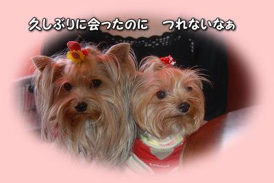 DSC_3979-e.jpg
