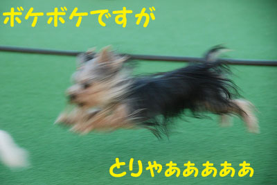 DSC_4076-e.jpg
