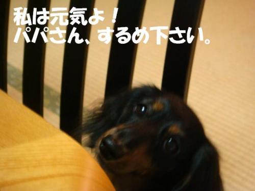 DSC03526ー編集