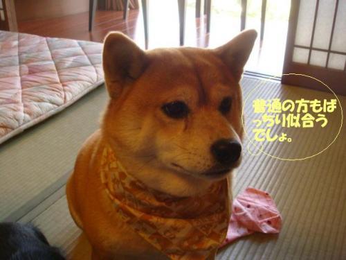 DSC04508ー編集