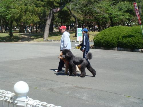 20100425-浜寺公園 010