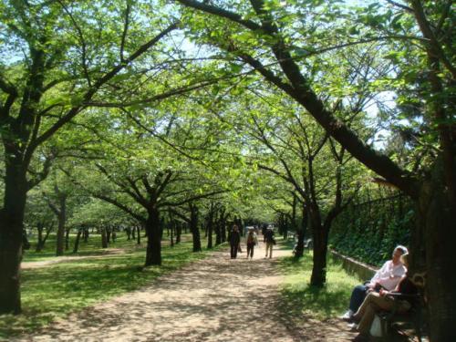 20100425-浜寺公園 020