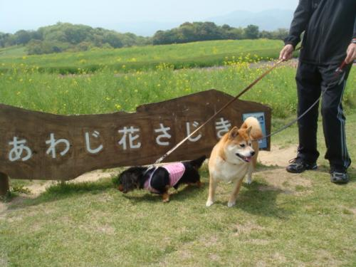 20100503-淡路島旅行 041