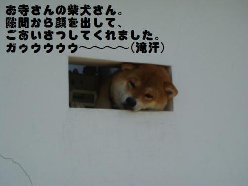 20100815-淡路島旅行 014ー編集