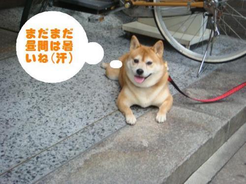 2010-日常082ー編集