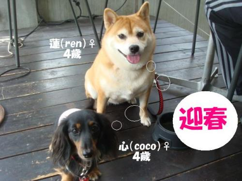 2010-日常( 053ー編集