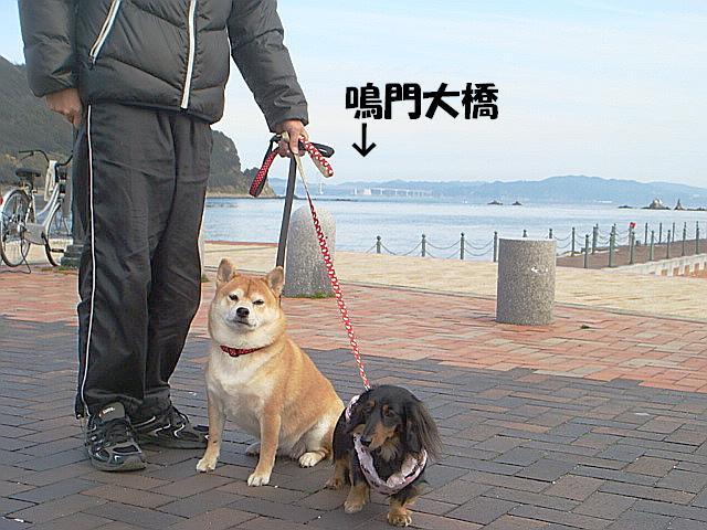 DSC05600(1)ー編集