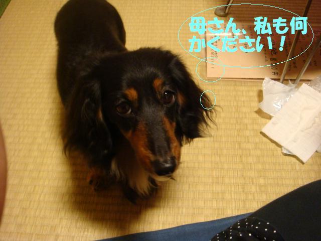 DSC06005-編集