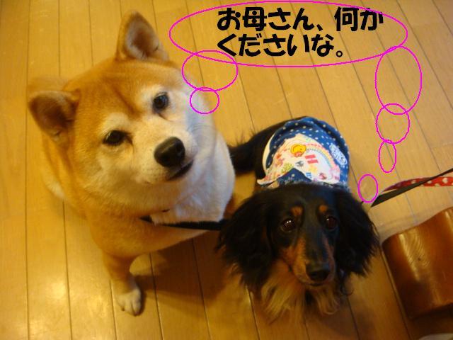 DSC06162ー編集