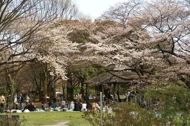 20100327 桜
