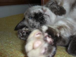 猫 にくきゅう