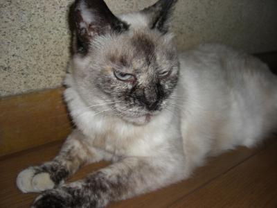 廊下の猫 1