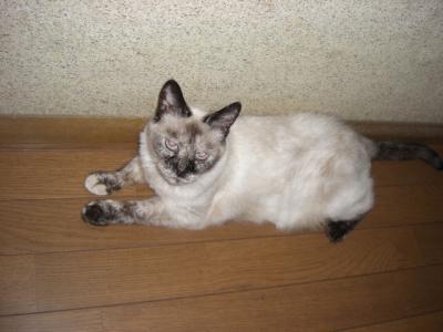廊下の猫 2