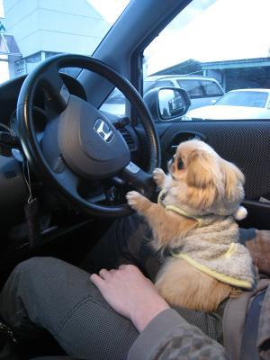 そらドライバー