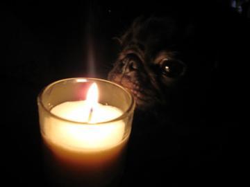 candlenightsummer1.jpg