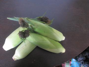 corn_20110831004634.jpg