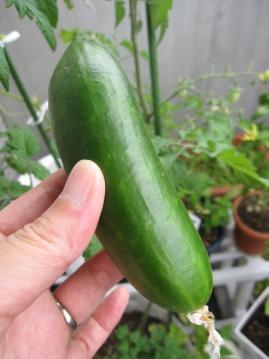 cucumber6.jpg