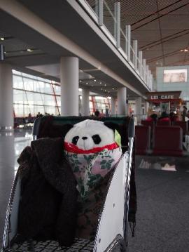 panda11.jpg