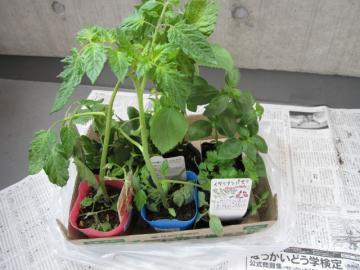plantergreen1.jpg