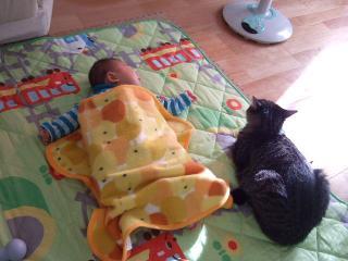 2008_1203cats0003.jpg