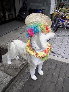 アフロ犬帽子
