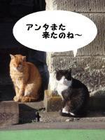 そらと猫 (2)