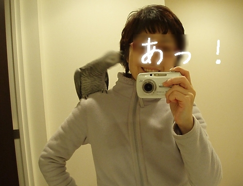 yomogi2009121002[1]