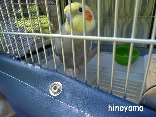 P1140688hinoyomo.jpg