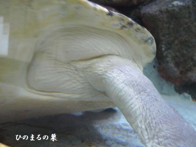 P1150594b.jpg