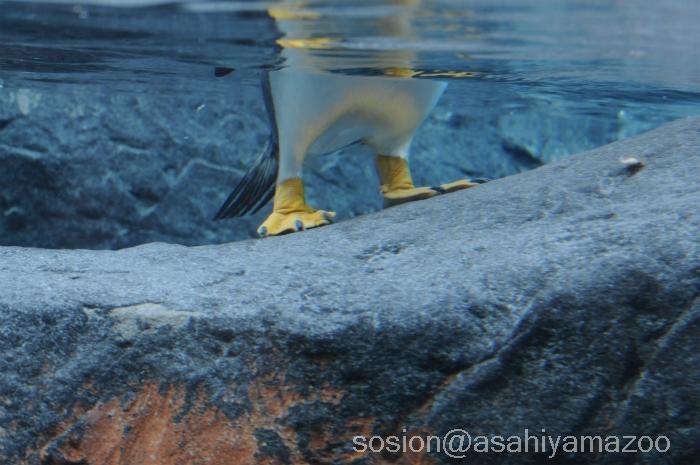 asahiyamazoo20101219p07.jpg
