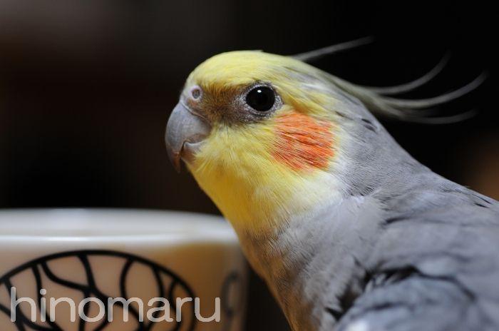 hinomaru20110331c.jpg