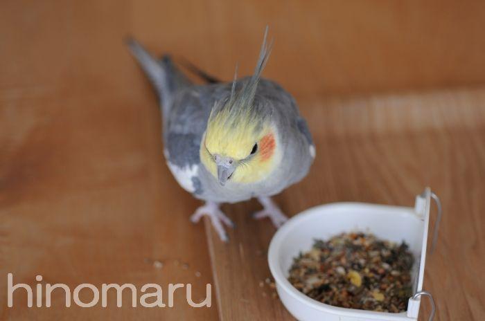hinomaru20110331e.jpg