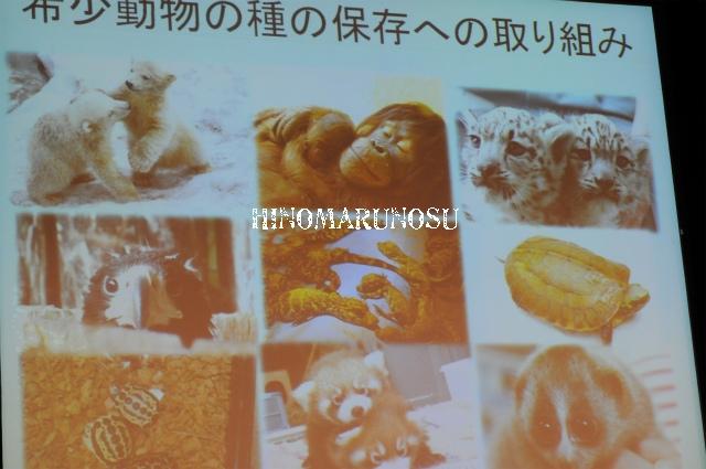 hinomarunosu0510201043.jpg