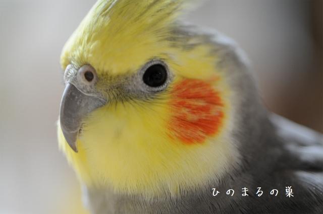 hinomarunosu2010100205.jpg