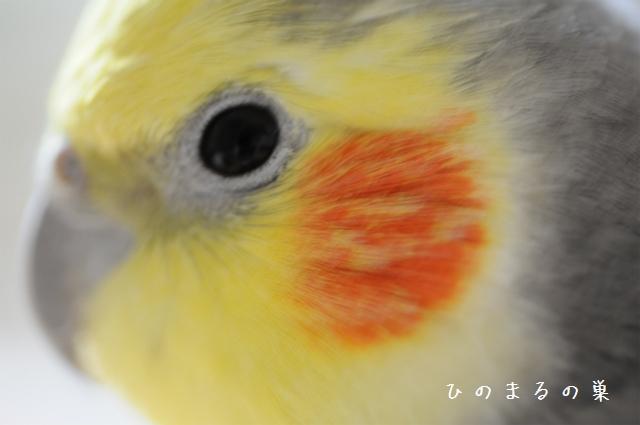 hinomarunosu2010100206.jpg