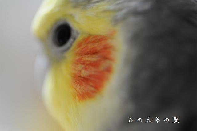 hinomarunosu2010100207.jpg