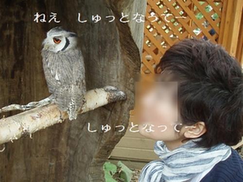 konohazuku02_20090921224740_20100309141755.jpg