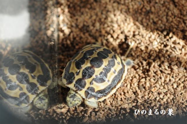 kumonosugame201009262.jpg