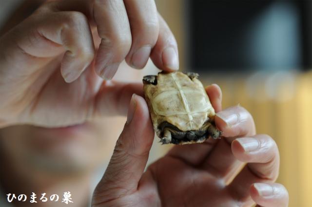 kumonosugame201009263.jpg